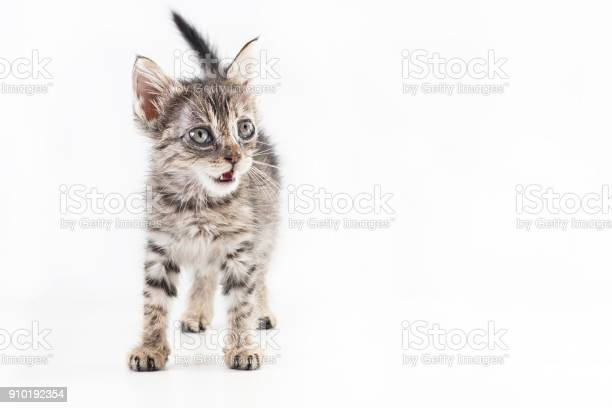 Sick eyes striped kitten meowing on white background isolated picture id910192354?b=1&k=6&m=910192354&s=612x612&h=mbtkgh65zgyrbgoi3mxyhs vvzpowbcntpbervbtpxa=