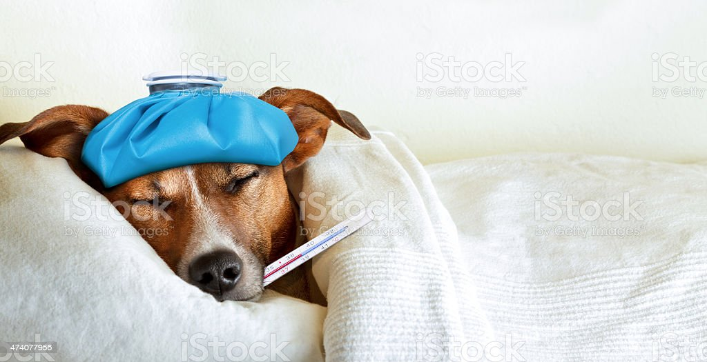 sick ill dog royalty-free stock photo