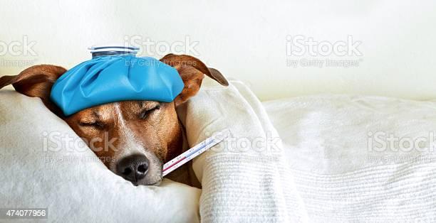 Sick ill dog picture id474077956?b=1&k=6&m=474077956&s=612x612&h=snrwum3g6ncmqlfln7tg1xc0phkv2xdhds0zylhonom=