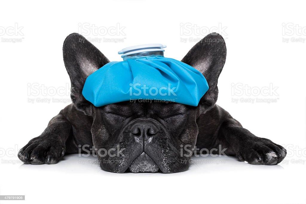 Krank Kranken Hund – Foto