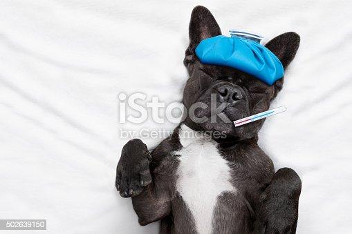istock sick ill dog 502639150