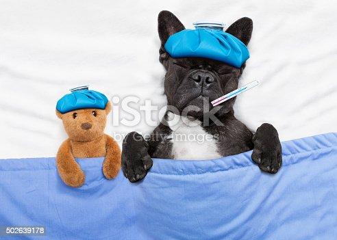 istock sick ill dog 502639178