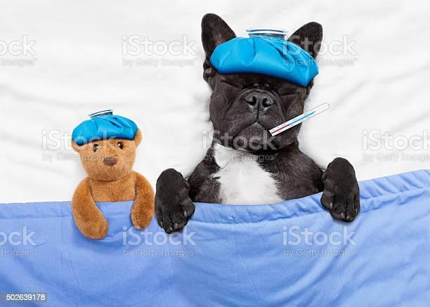 Sick ill dog picture id502639178?b=1&k=6&m=502639178&s=612x612&h=valgkk4qx1wsqejmuggohow4r46b3b wgl7qo4nhllg=