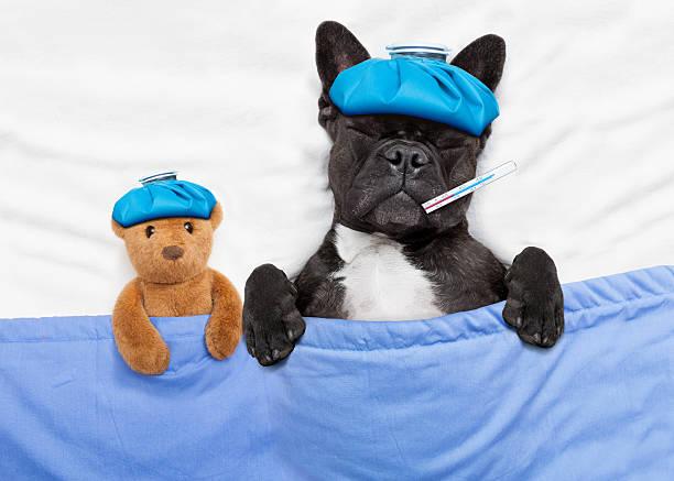 Sick ill dog picture id502639178?b=1&k=6&m=502639178&s=612x612&w=0&h=ajgwvxqgvqmoptnona8p1b8izo9otu9xikzltkj46mo=