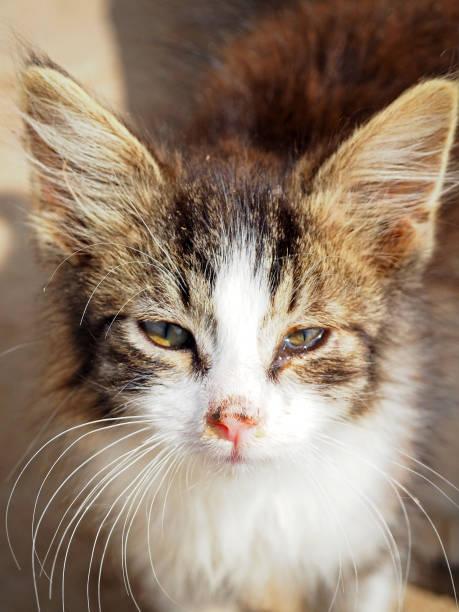 Sick little kitten colds purulent discharge from the eyes and nose picture id906894350?b=1&k=6&m=906894350&s=612x612&w=0&h=abcg2v avabvrcydkfrrxkx5jqzvowtr9iqaixvizly=