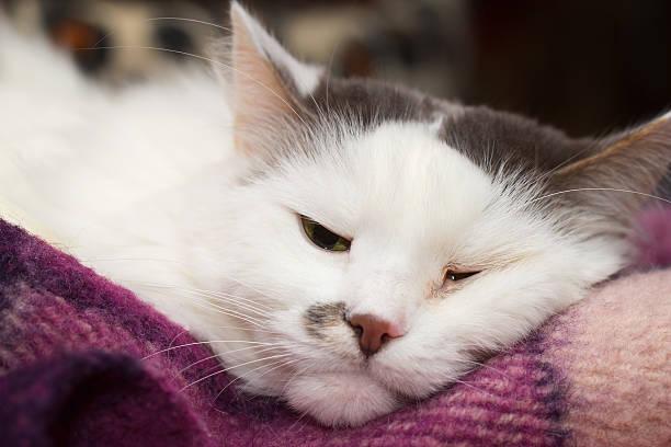 Sick white cat stock photo