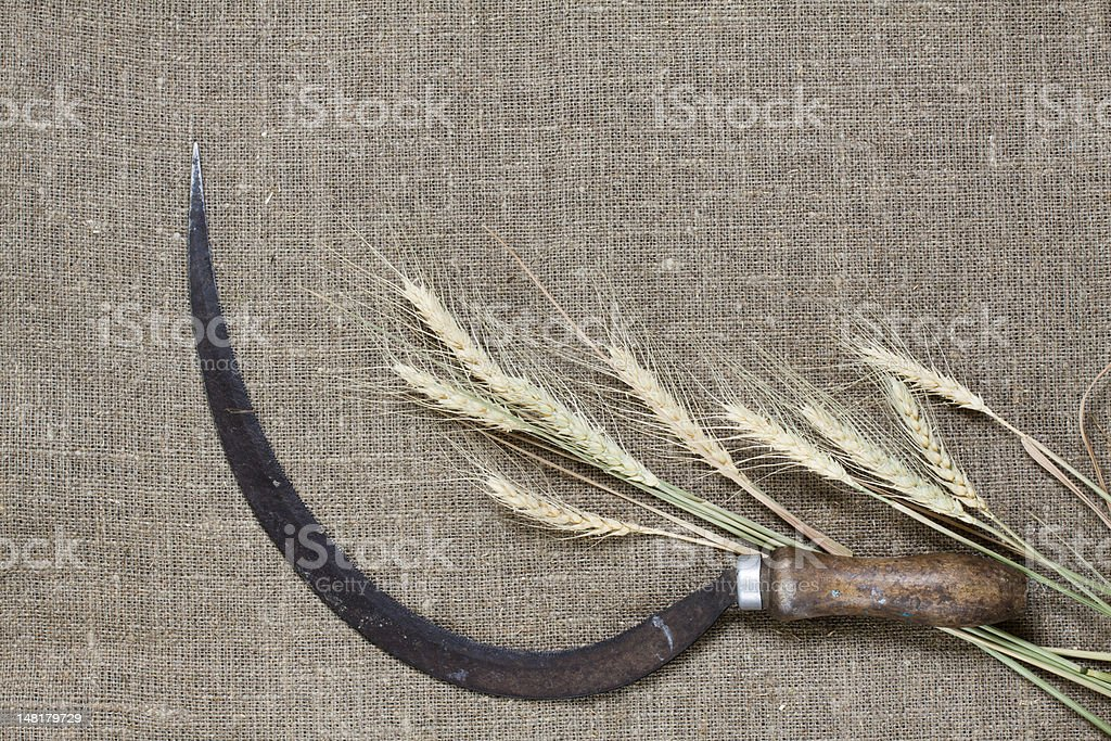 Sickle and wheat on canvas stock photo