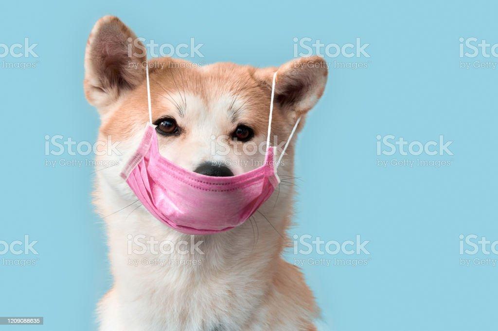 秋田 犬 マスク