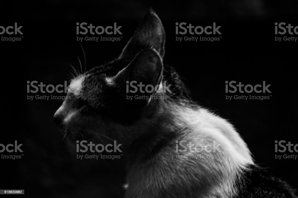 Side body of the cat stock photo