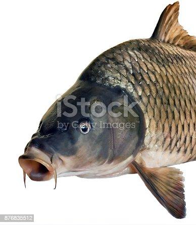 istock side head fish big carp 876835512