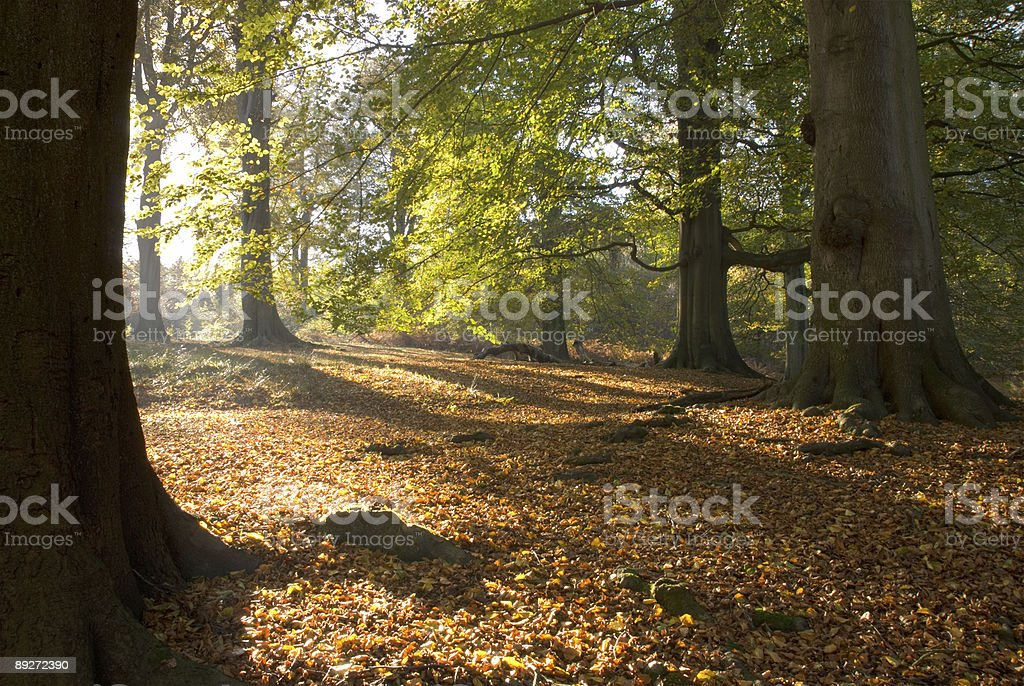 Side lighting of Autumnal woods royalty-free stock photo