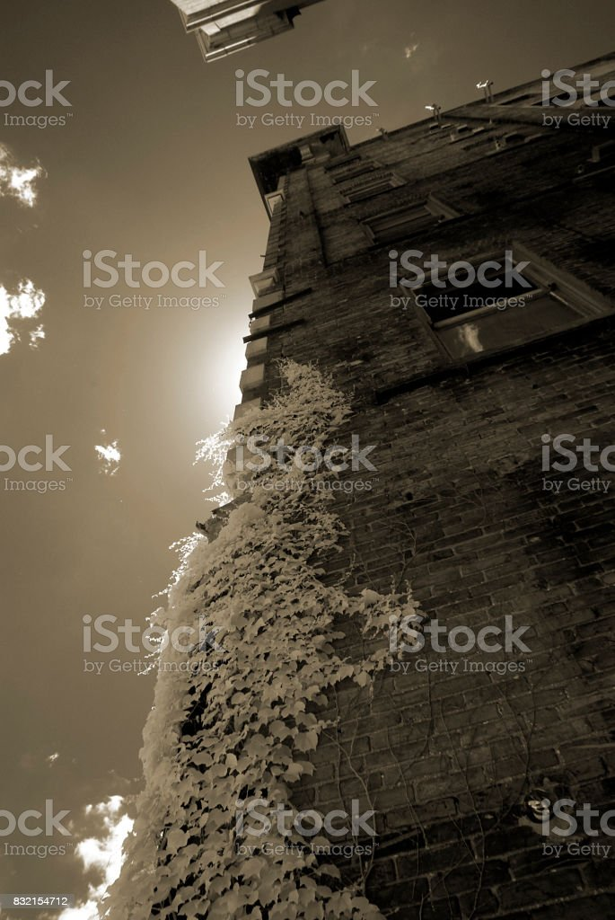 Side of Abandoned Building with Ivy stock photo