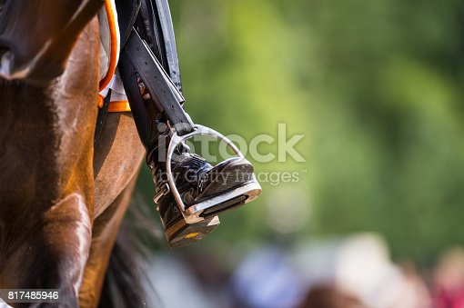 Profile of rider´s boot, stirrup and side of dressage horse.