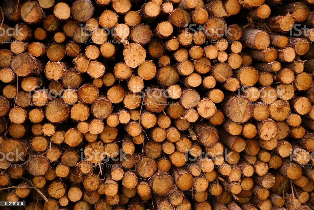 Side of log stack stock photo
