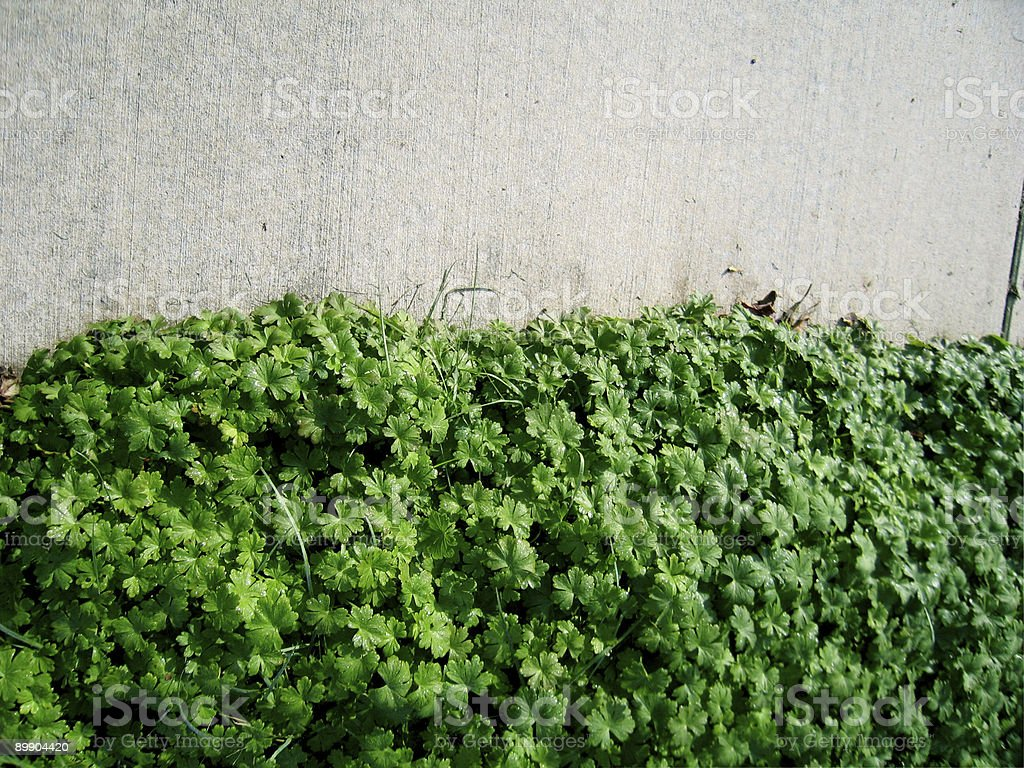 Side Plants royalty-free stock photo