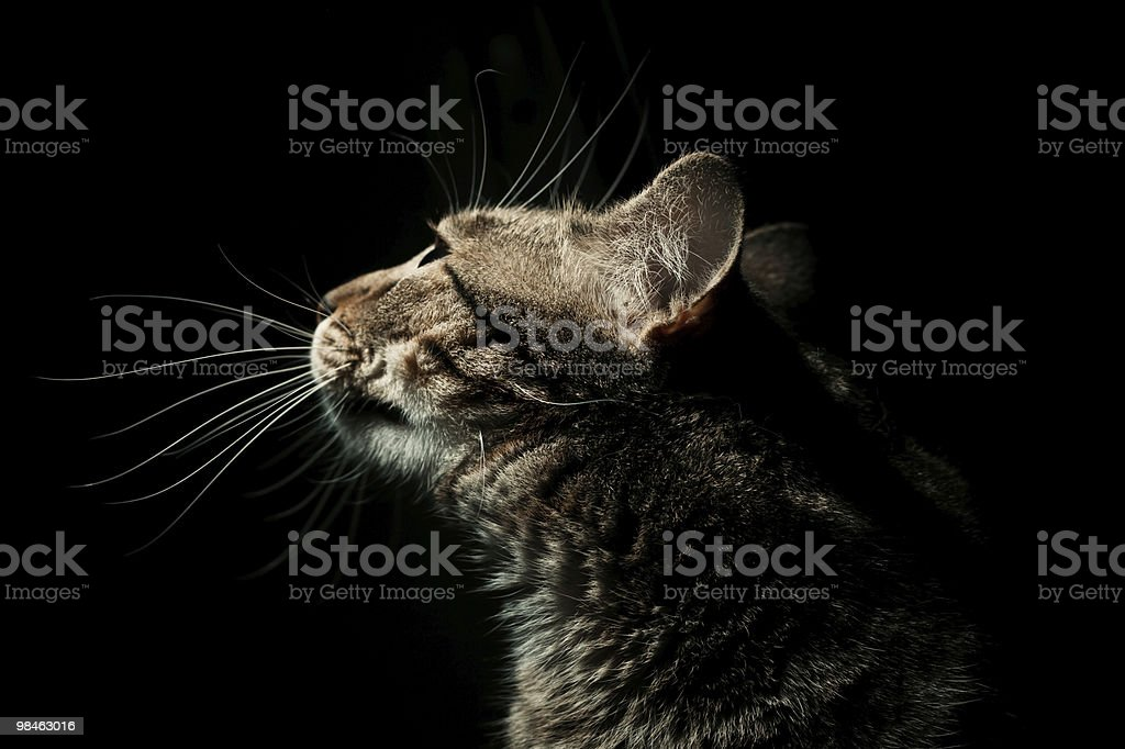 Side profile portrait of cat royalty-free stock photo