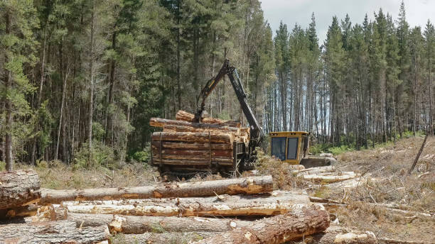 side view of a log loader loading pine logs near tarraleah in tasmania - logging equipment stock photos and pictures