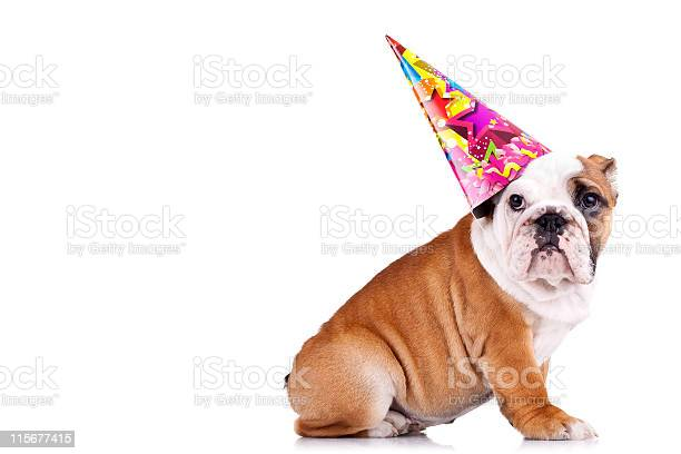 Side view of an english bulldog wearing a party hat picture id115677415?b=1&k=6&m=115677415&s=612x612&h=yxpg6tje nnqehgt  qpcuo6noum 02ysfu2da bd18=