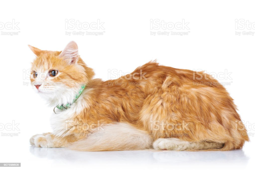 side view of an orange cat laying down stock photo