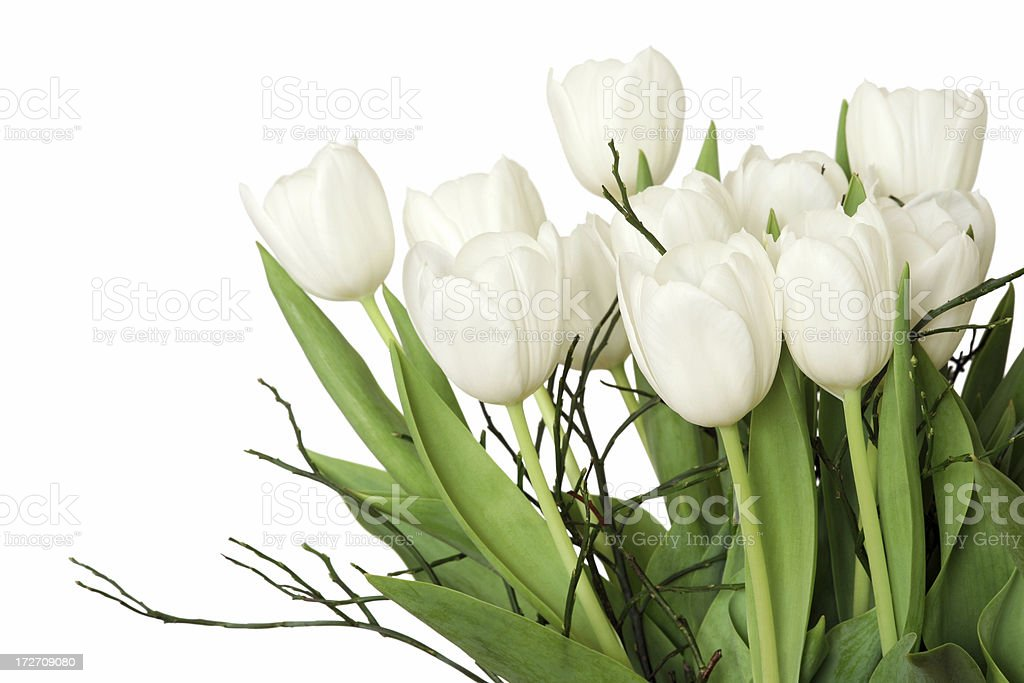 Side view of bouquet with white tulips, isolated fragment stock photo