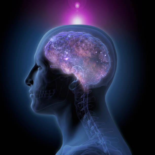 Side View of Enlightened Human Brain on Black Background 3d rendering of a man in profile with a glowing brain illuminated by stars inside and the crown chakra illuminated at the top of the head on a black background. cerebellum stock pictures, royalty-free photos & images