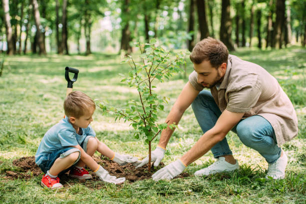 side view of father and son planting tree at park - alberi foto e immagini stock