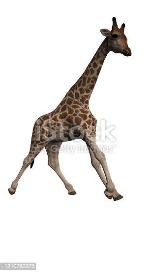Side view of giraffe with wide angle lens on isolated white background 3d renderin