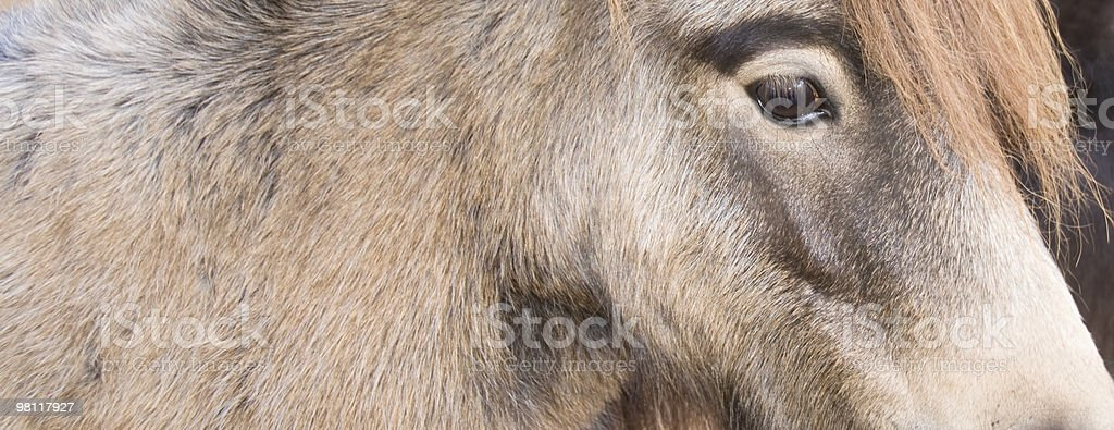 Side view of horse in close-up. royalty-free stock photo
