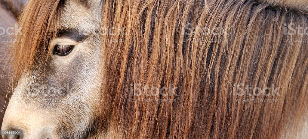 Side view of horse royalty-free stock photo