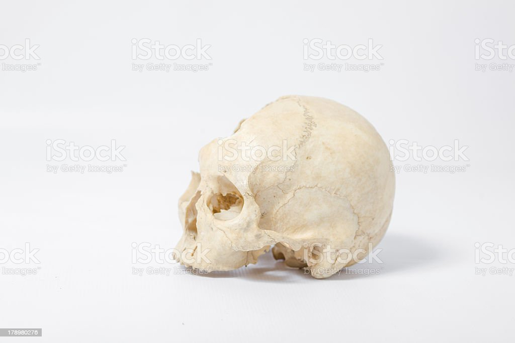 Side view of human skull royalty-free stock photo