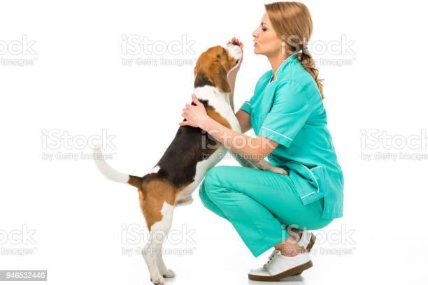 Side view of veterinarian in uniform with cute beagle dog isolated on picture id946532446?b=1&k=6&m=946532446&s=612x612&h=7z6ku3biqxu ridlbgvztxxxdin0ny29kmqv0mvt2nw=