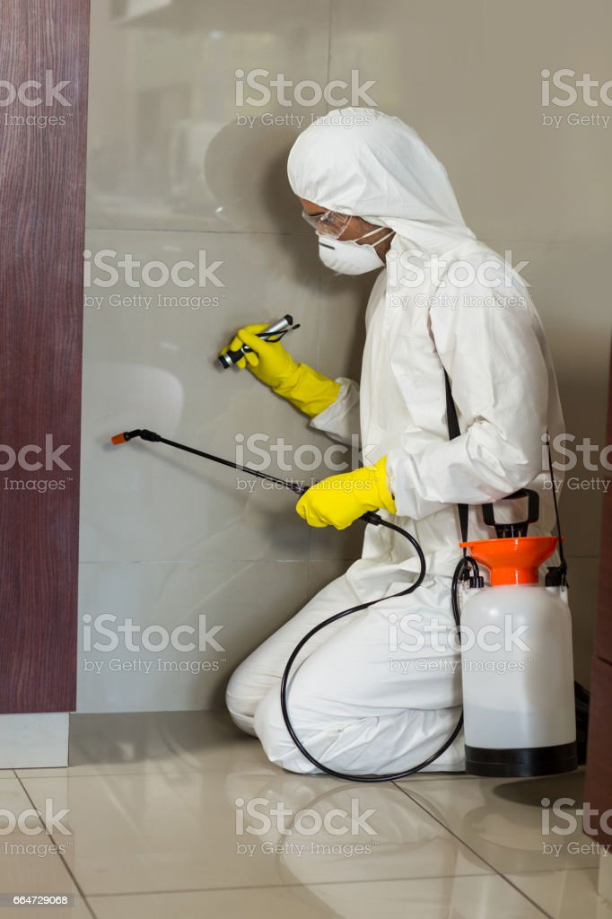 Side view of worker using insecticide on wall stock photo