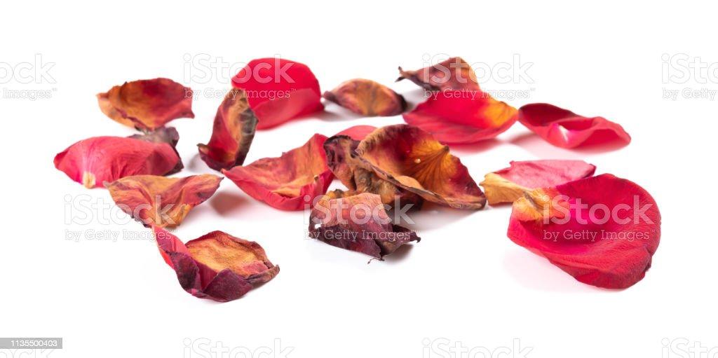 pétalas da vista lateral de rosas desvanecidas no backgorund branco - foto de acervo