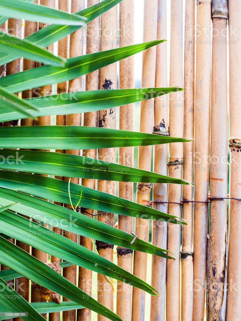 Side view photo from a natural bamboo wall with palm leaf . This photo with texture, patterns, asian reference and nature stock photo
