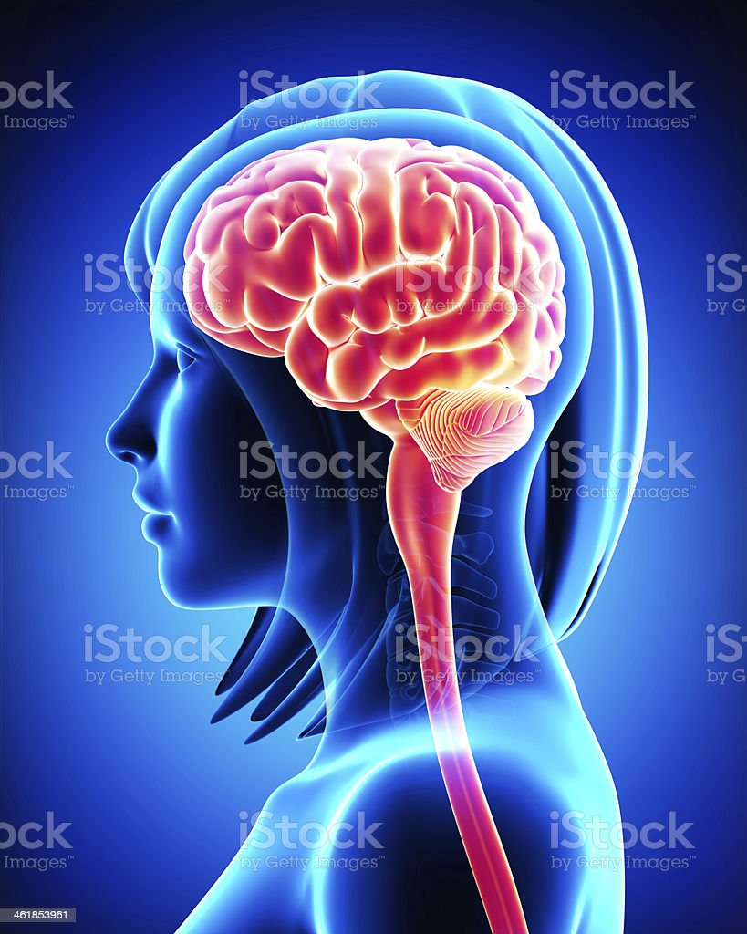 Side view x-ray of woman's brain stock photo