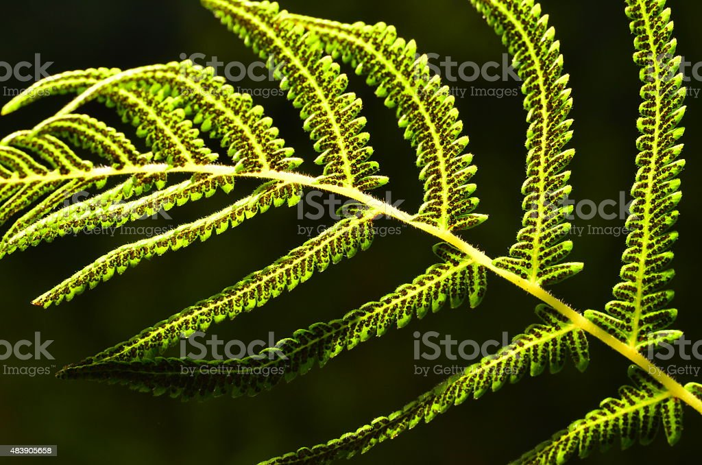 Side-lit fern and seeds against green background stock photo