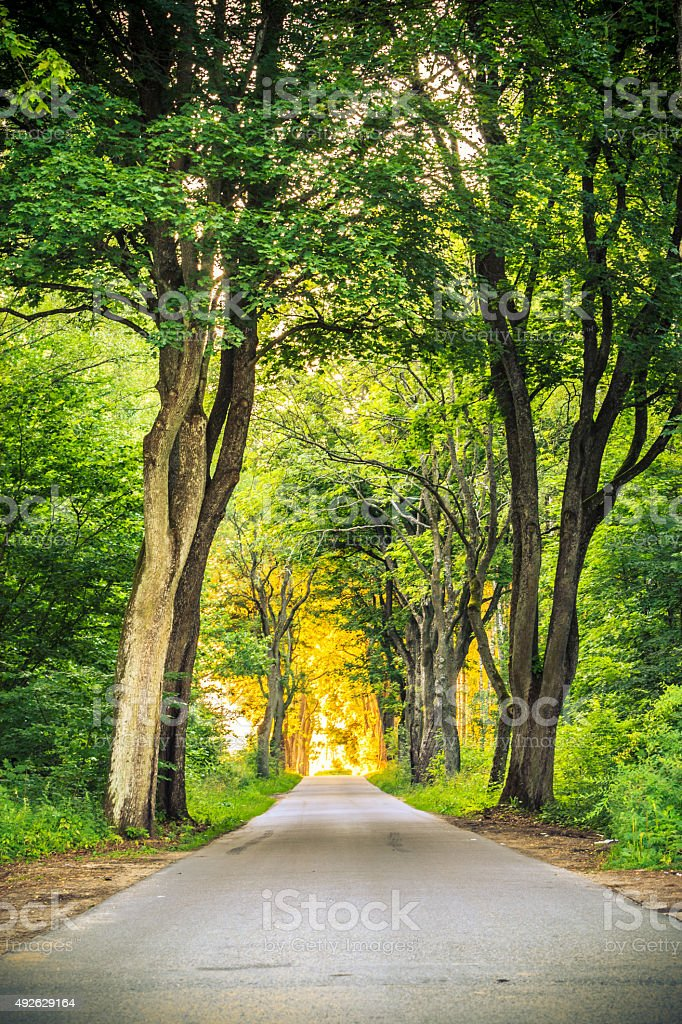 Sidewalk Alley Path With Trees In Park Stock Photo