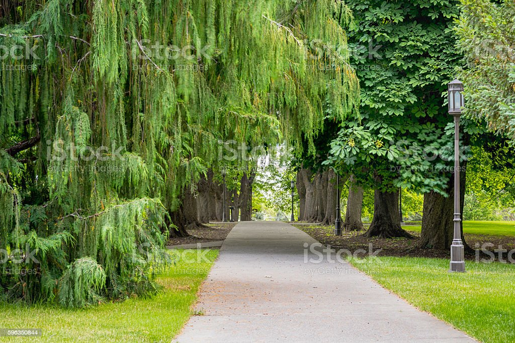 Sidewalk lined and covered by green trees royalty-free stock photo