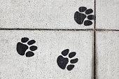 Sidewalk Paw Prints