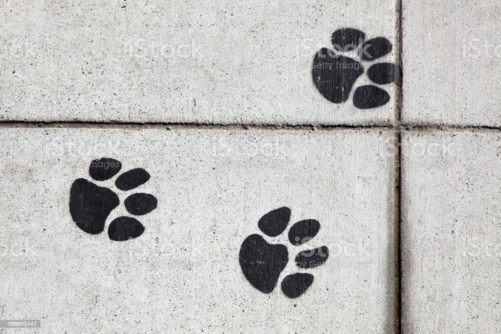 Sidewalk Paw Prints stock photo