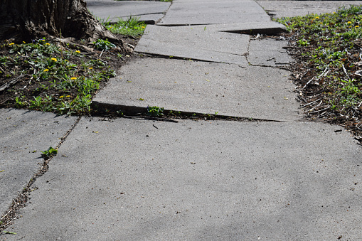 A sidewalk made uneven by tree roots