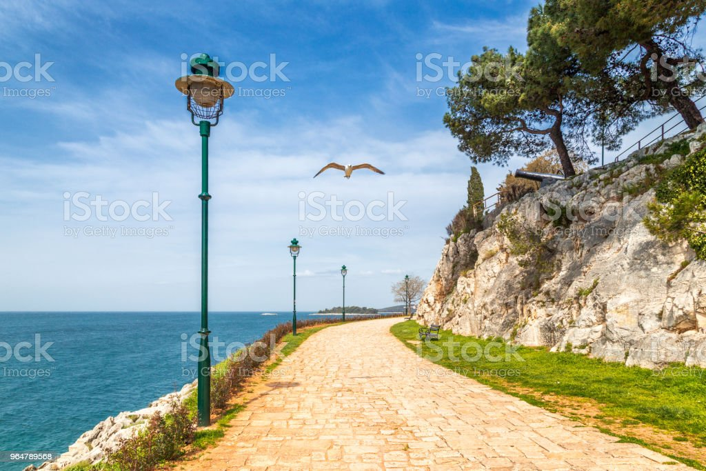 Sidewalk with flying seagull at Adriatic sea, Rovinj town. royalty-free stock photo