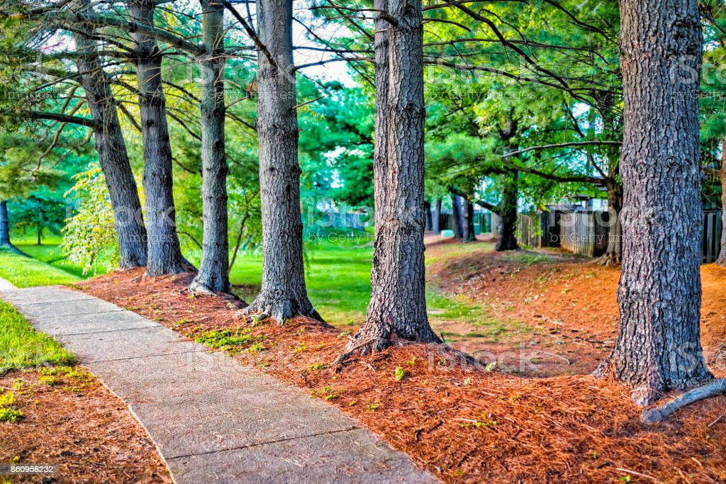 Sidewalk with row of trees in orange mulch in suburban neighborhood with path stock photo