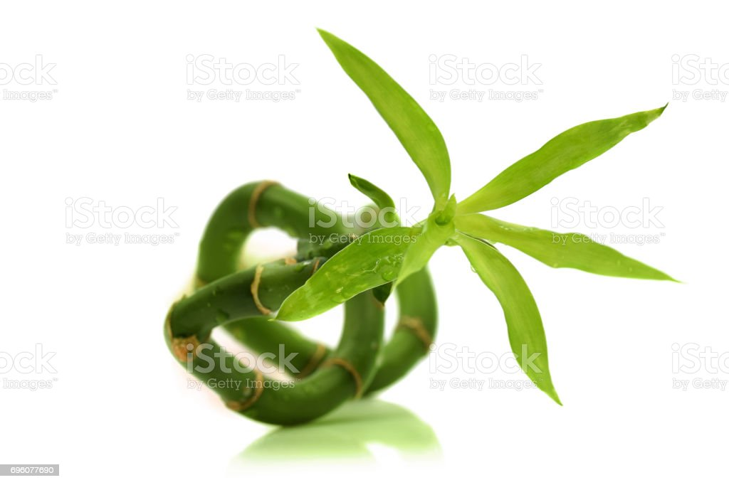 Sideways bamboo stock photo