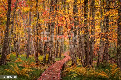 Boardwalk through the forest, Acadia National Park, Maine