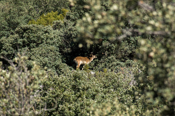 Sierra de grazalema natural park picture id1146775688?b=1&k=6&m=1146775688&s=612x612&w=0&h=khjqfzih yamh63lqruemsj2gwole07ompoum3gna u=