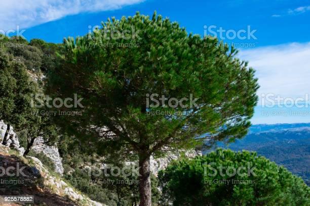 Sierra de grazalema natural park picture id925578882?b=1&k=6&m=925578882&s=612x612&h=kweud6c do5ifbvtyx2oyu3e8cklndyx j9jddyr5co=