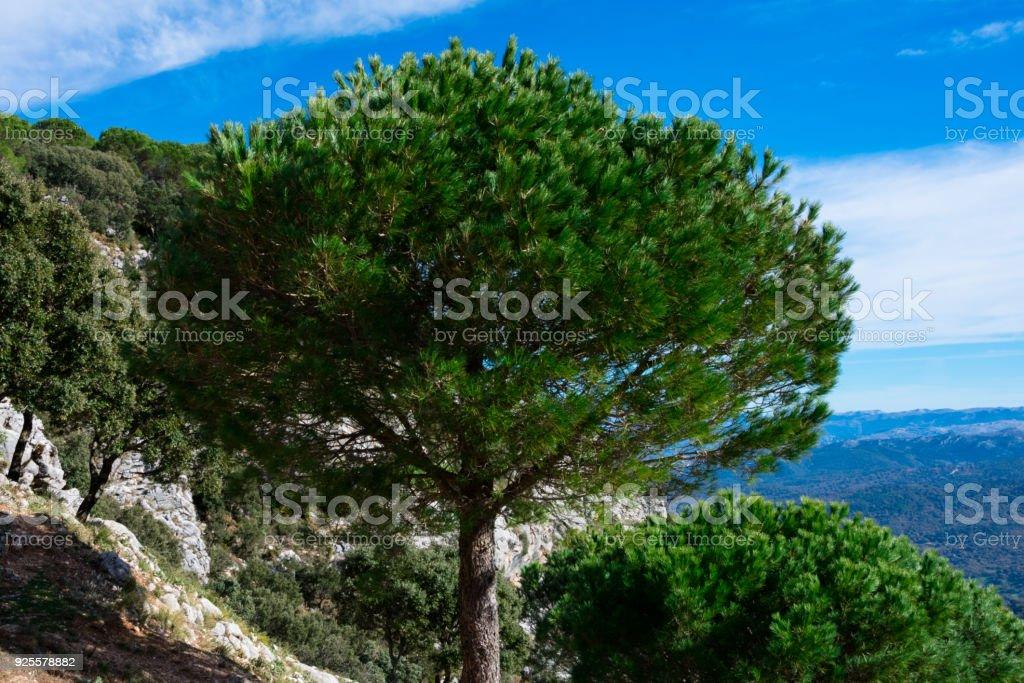 Sierra de Grazalema Natural Park stock photo