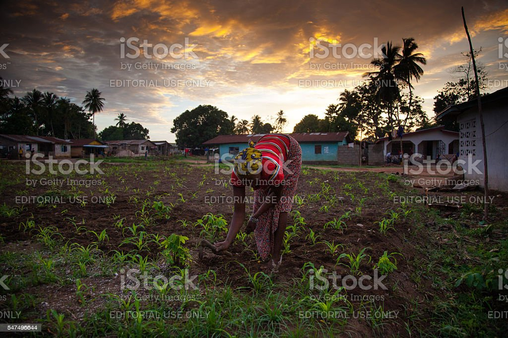 Sierra Leone, West Africa, the beaches of Yongoro stock photo