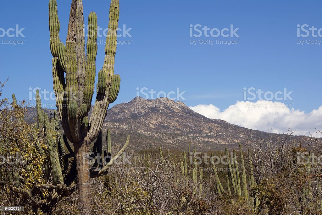 Sierra Madre mountains and desert stock photo